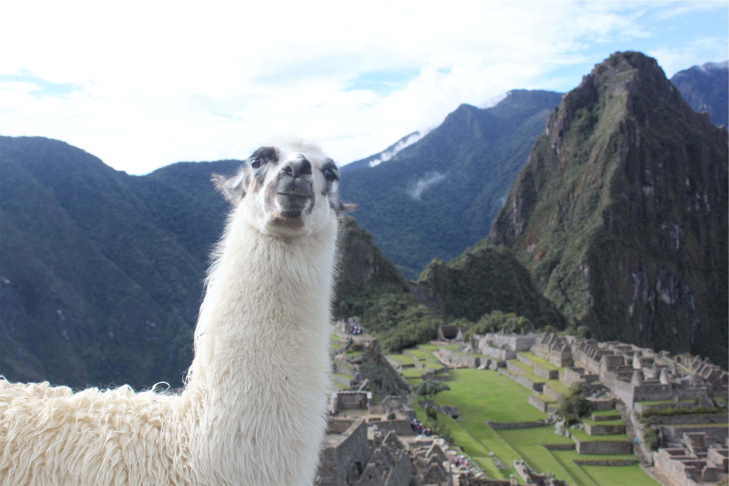 When Your Underwear Are Stolen at Machu Picchu